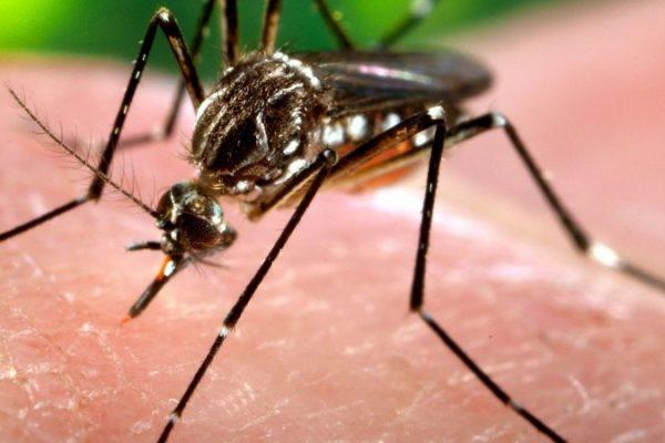 OPS alerta sobre incremento de casos de dengue en Latinoamérica