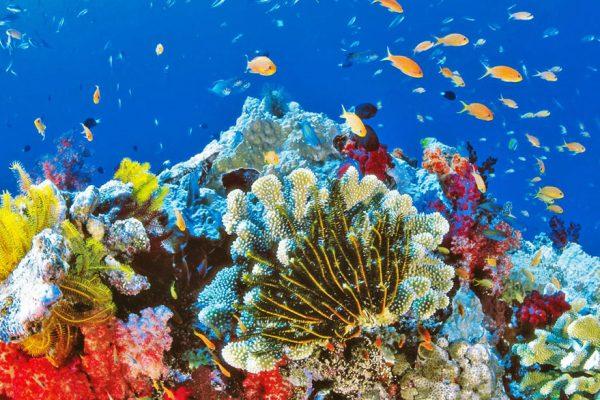 El arrecife más grande del mundo está muriendo