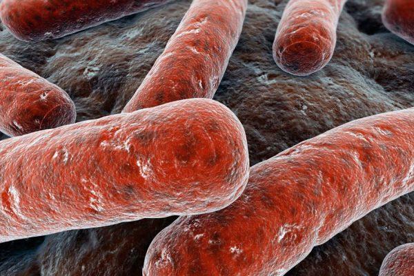 Crecen los casos de tuberculosis en el país