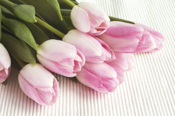 ¡Feliz Día de las Madres! conozca los orígenes de la celebración
