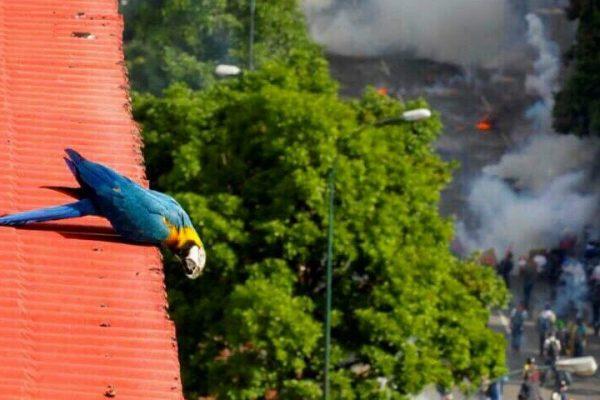 Afirman que gases lacrimógenos afectan la flora y fauna urbana