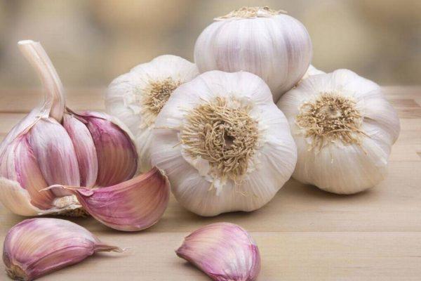 Conozca los beneficios del ajo para la salud