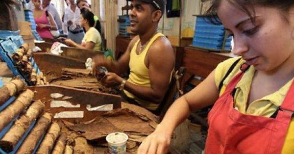 Cuba potencia producción de tabaco y el cultivo de la variedad Burley