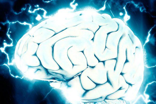 Científicos ven por primera vez todas las células de una región cerebral