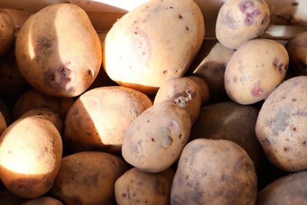 Las papas son la «columna vertebral» de los productores del altiplano de Bolivia