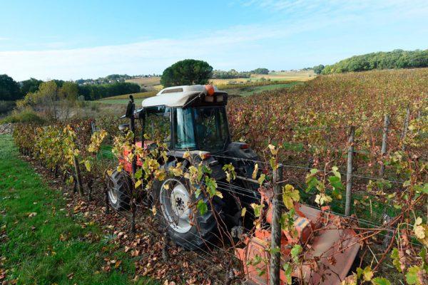 Producción mundial de vino en su peor nivel en 50 años
