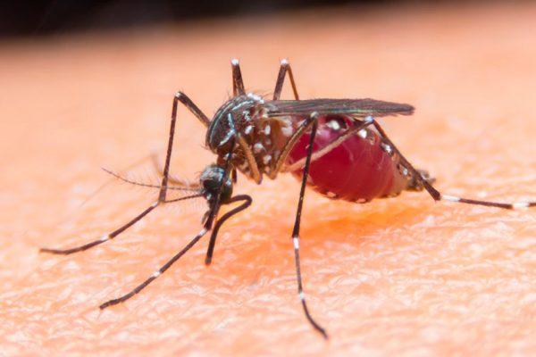 La malaria recrudece en las comunidades indígenas del sur del país