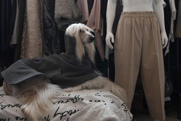 Milán, la capital de la moda canina