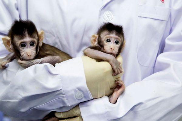 Científicos chinos clonan a dos monos con método de Dolly