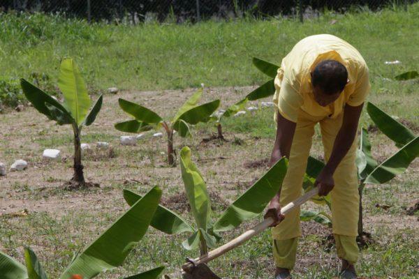 Entregan Bs 100 millones para plan agroindustrial penitenciario