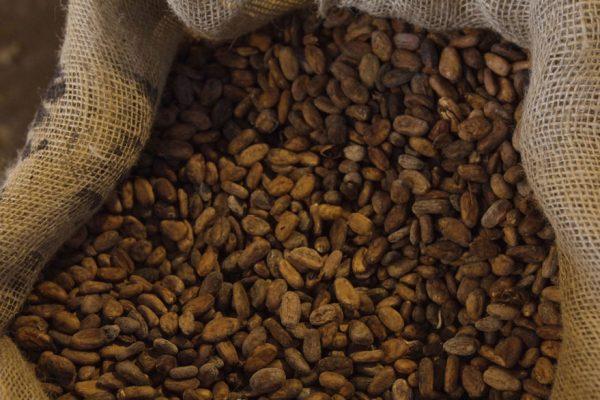 Aprueban nuevas normas Covenin de calidad para café y cacao