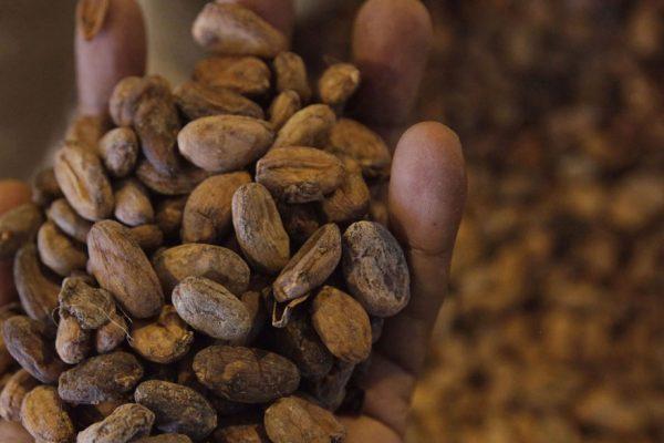 Venezuela exporta 150 toneladas de cacao
