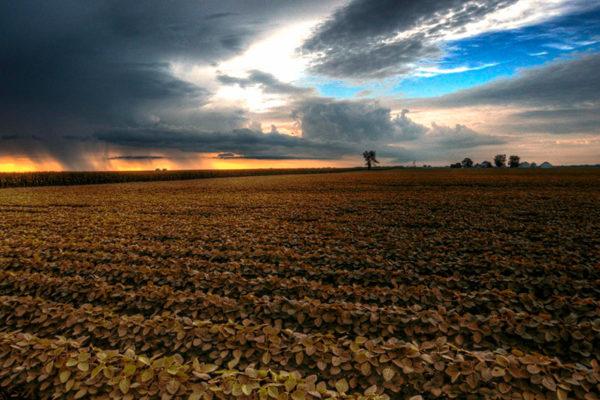 WWF: La agricultura no está preparada para el cambio climático