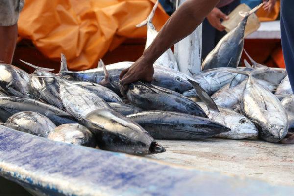 En el primer semestre del 2021 se han exportado más de 16 millones de productos marinos