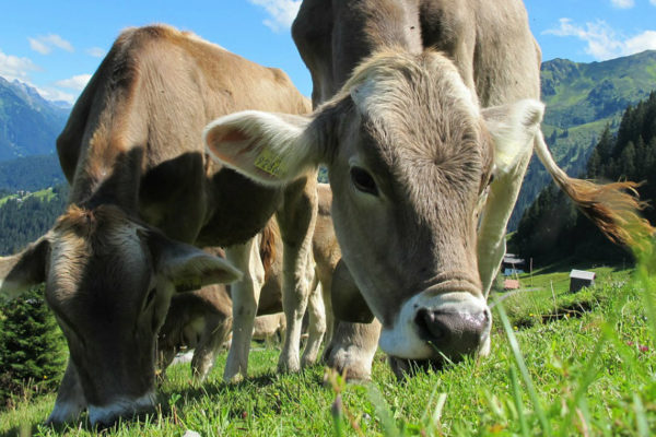 Venezuela suspende importación de animales de Colombia