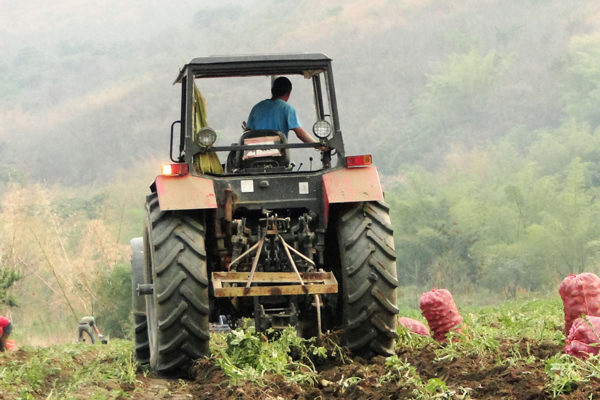 Fedeagro: producción de hortalizas podría aumentar 15% en 2020