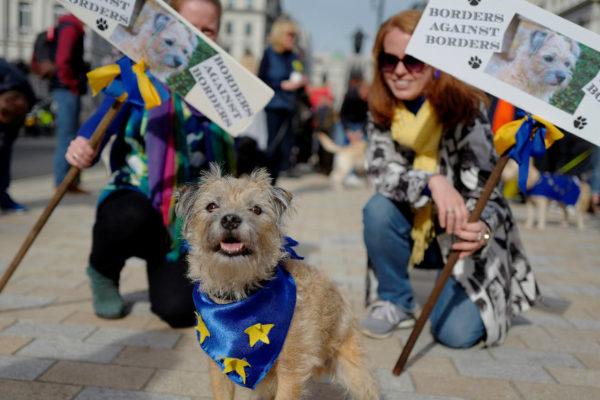 Cientos de perros ladran en Londres contra el Brexit