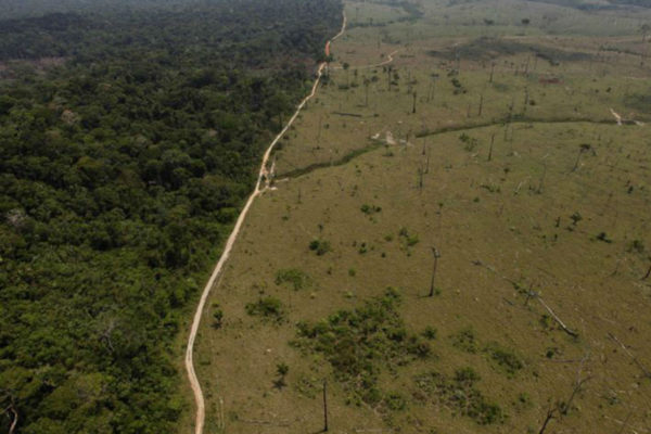 Greenpeace: consumo de soja OGM aumenta deforestación en América Latina