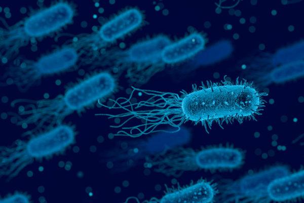 Bacterias multirresistentes causaron 33.000 muertos en Europa