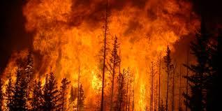 Incendios forestales en Chile ya han arrasado al menos 53.000 hectáreas