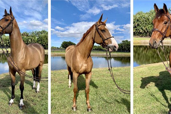 Subasta de caballos de Alejandro Andrade recauda $1,23 millones