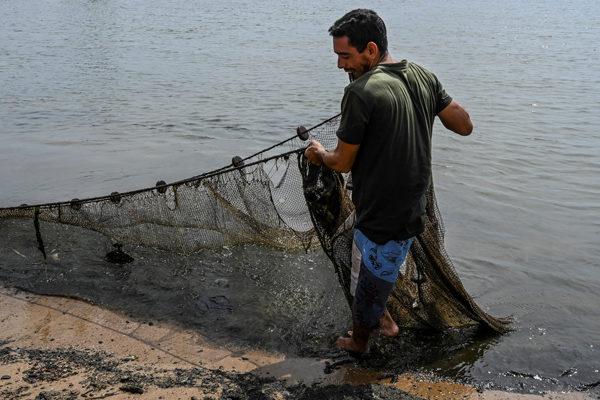 Aumentó en 94% distribución en el sector pesquero durante 2019