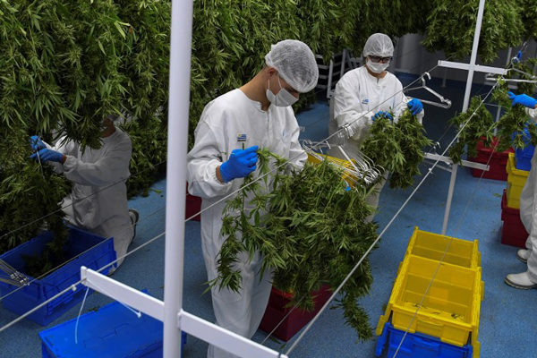 El mercado de valores del cannabis: una inversión que vale la pena en el 2020
