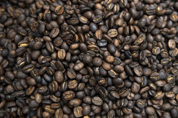 Exguerrilleros de las FARC siembran café con la esperanza de cosechar la paz