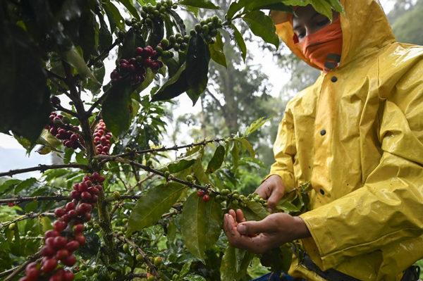 El desempleo en Colombia se sitúa en el 13 % en enero