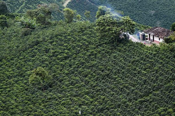 Colombia busca inversión extranjera para potenciar su subutilizado potencial agroindustrial