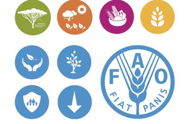 FAO y CE: Las crisis alimentarias podrían multiplicarse en el mundo