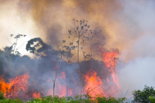 Duque ofrece ayuda a Brasil para detener tragedia ambiental en la Amazonía