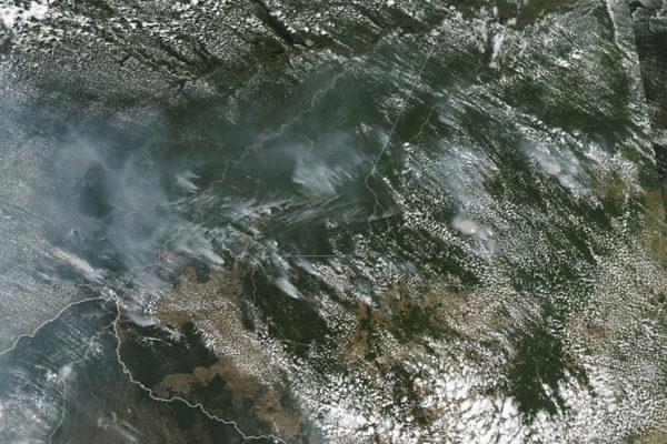 Incendios en la Amazonia destruyen biodiversidad única y aceleran riesgos del cambio climático