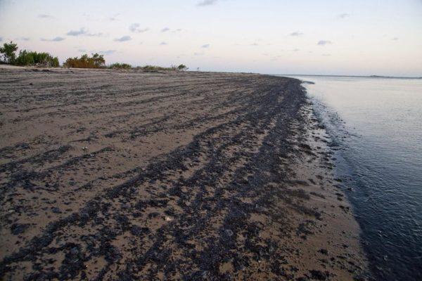 Petrolero con pabellón griego es «el principal sospechoso» de marea negra en Brasil