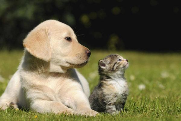 En Wuhan, las mascotas se han vuelto víctimas colaterales del coronavirus