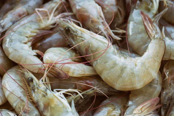 Venezuela exportará camarón blanco a China