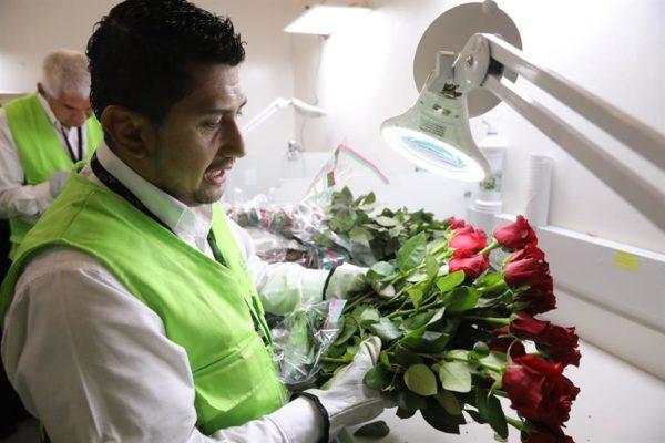 Colombia y el reto de exportar 600 millones de flores por San Valentín