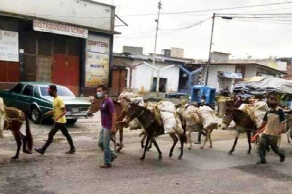 Cosechas de productos agrícolas se pudren por falta de combustible en Venezuela