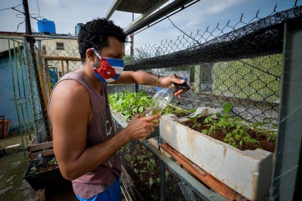 Agricultura urbana se expande en Cuba no por activismo ambiental sino por necesidad