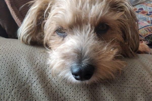 Banplus promueve la adopción de mascotas con charla del veterinario Otto Alvarado