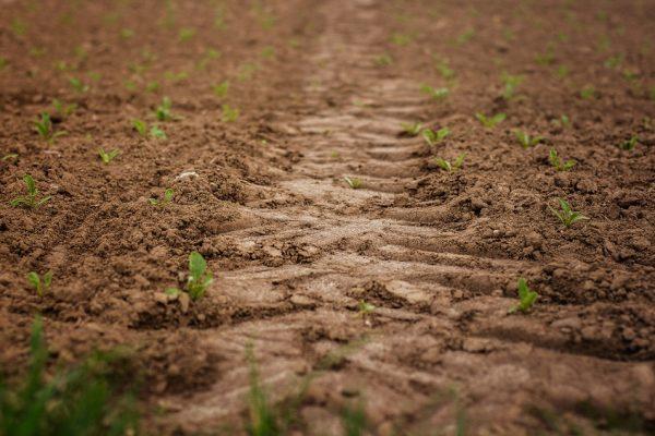 Informe Especial | Producir alimentos en Venezuela es una actividad de muy alto riesgo
