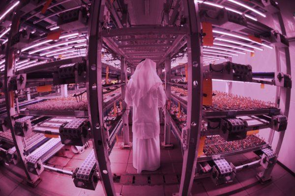 Ultramoderna granja demuestra voluntad de Dubái de originar una «revolución agrícola»