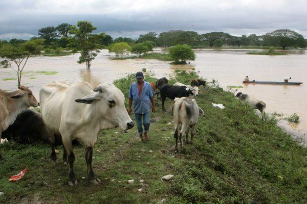 Producción de alimentos en Sur del Lago está paralizada por falta de combustible