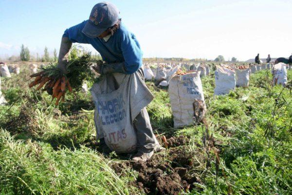 Invasiones y escasez de diésel: Los graves problemas que enfrentan los productores agropecuarios
