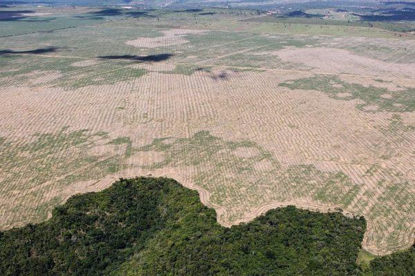 América Latina, la región más golpeada por los mayores focos de deforestación