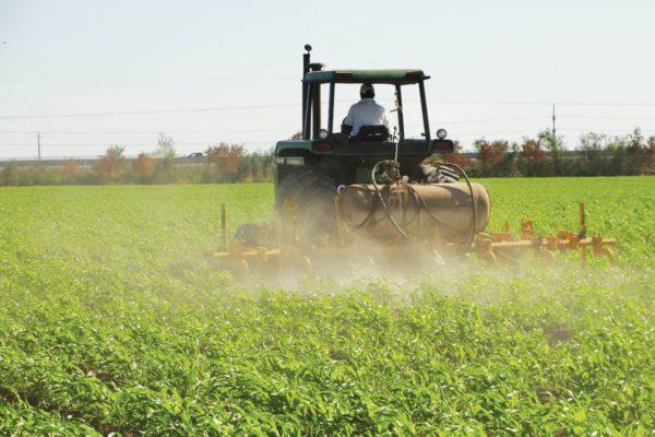 Producción de alimentos es sostenida en 95% por esfuerzo privado pero cubre solo 20% de la demanda