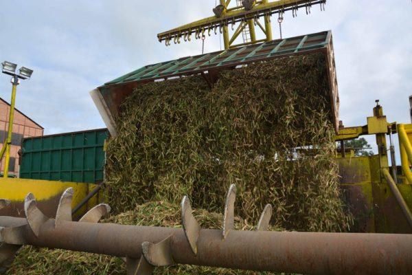 Molienda de azúcar aumentó 20% a pesar de la escasez de diésel pero habrá que importar a precios más elevados