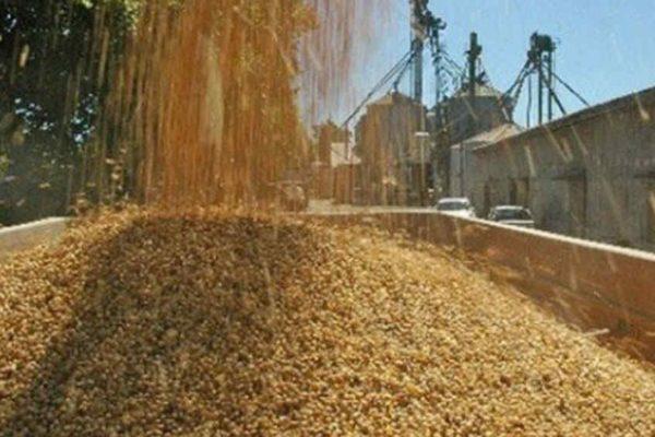 1.500.000 litros de diésel: Lo que necesitan productores de arroz para recoger la cosecha