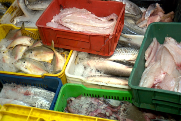 Especial | Consumo de pescado se mantiene en Semana Santa a pesar de los precios astronómicos