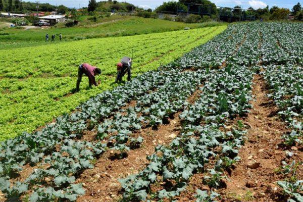 Para levantar la producción agrícola se requieren 12.000 millones de dólares